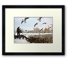 Feeding The Ducks Framed Print