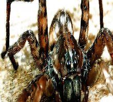 Wolf Spider by Carla Jensen