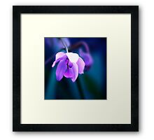 Colour Of Life XXVIII [Print & iPad Case] Framed Print
