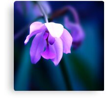 Colour Of Life XXVIII [Print & iPad Case] Canvas Print