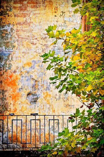 Fall by Silvia Ganora