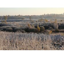 First frost in grassland Photographic Print