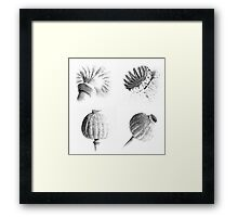 Poppy Heads Collection 1234 Framed Print