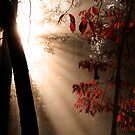 Morning Fog by Eileen McVey