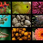 9 images of nature by Rod Gonzalez