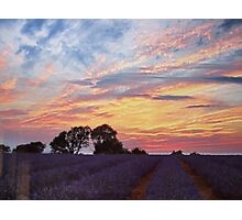 Sunset over lavender fields Photographic Print