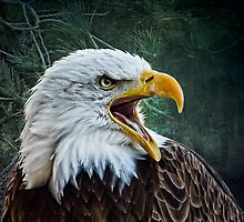 The Eagles Cry by Tarrby