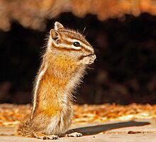 Chipmunk by Keri Harrish