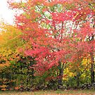Beautiful Fall colors by Esperanza Gallego