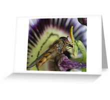 Hoverfly and passion fruit Greeting Card