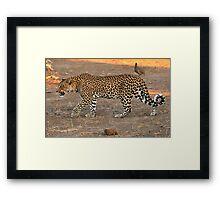 Stalking leopard - Mashatu, Botswana Framed Print