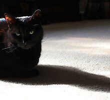 Thomas and his Shadow 4 by marybedy