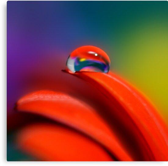 Colour Of Life XXI [Print & iPad Case] by Damienne Bingham