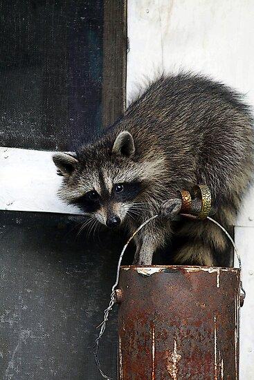 Sneaky Bandit by Jeffrey J. Miller