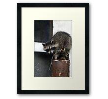 Sneaky Bandit Framed Print