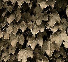 Leaves by Robert Baker