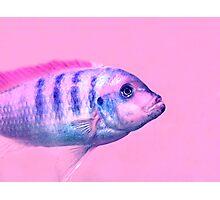 Fish :) Photographic Print