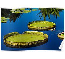 Lily pads at Denver Botanic Gardens Poster
