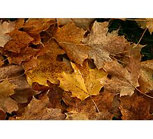 The fallen leaves of october Photographic Print