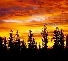 Sunrise - Alberta, Canada by Jessica Karran