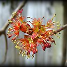 Blooming Buds by Kelly Nowak