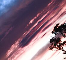 purple haze  by Shauna Stannard