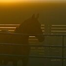 The Paddock in Morning Fog  by RichImage
