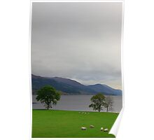 Loch and Sheep Poster