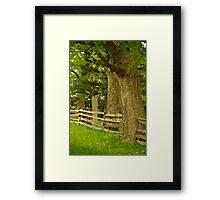Summer trees............. Framed Print