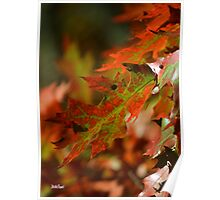 Oak Leaves in the Fall Poster