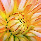 Orange dahlia. by Mundy Hackett