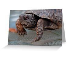 Edward, the lil Box Turtle Greeting Card