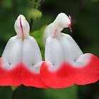 """""""Garden Bells"""" by jonxiv"""