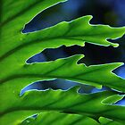 PALM FROND by dez7