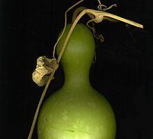 """""""Bird House"""" Gourd by Barbara Wyeth"""