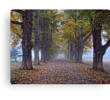 Maple Lane Canvas Print