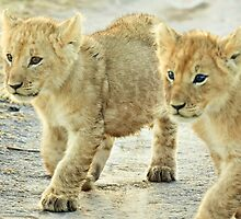 Twin Cubs by Jill Fisher