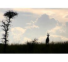 Impala, Uganda Photographic Print
