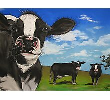 Cows in the Meadow Photographic Print