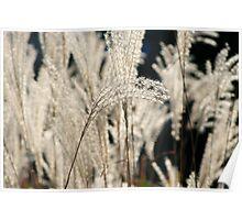Urban Grasses Poster
