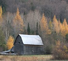 Barn In The Tamaracks by Tracy Faught