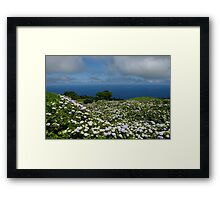 Hydrangeas in Horta, Azores Framed Print