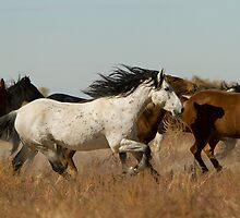 Horse Power by Kent Keller