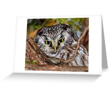 Boreal Owl in a Tree Greeting Card