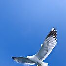 Hungry seagull by benjy