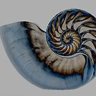 Nautilus in blue by Fisher