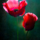 Poppy Pair by Jan Bickerton