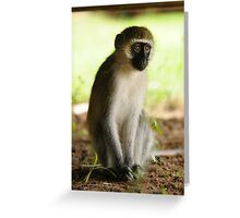 The Stare - Kenyan Monkey Greeting Card
