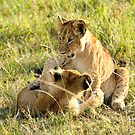 Lion Cubs Wrestling by Rhys Herbert