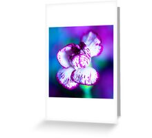 Colour of Life XII [square] Greeting Card
